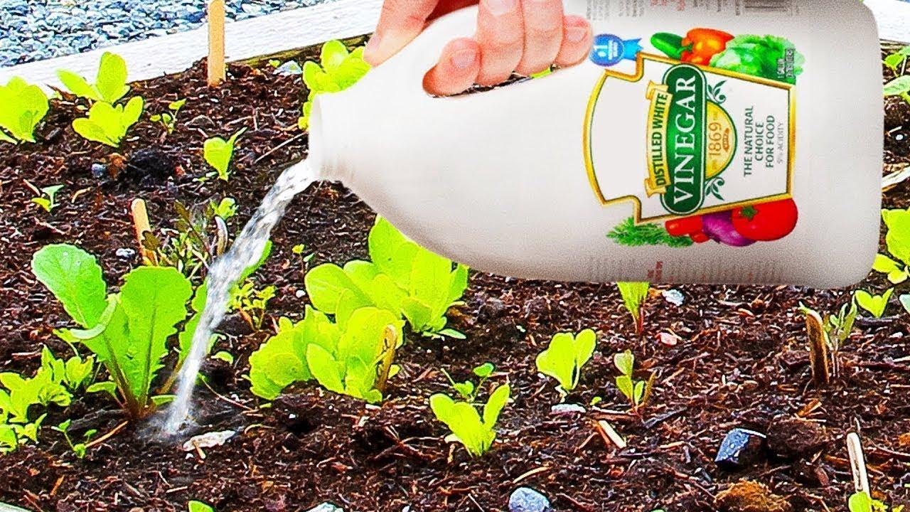Esto sucederá en tu jardín si usas vinagre blanco.
