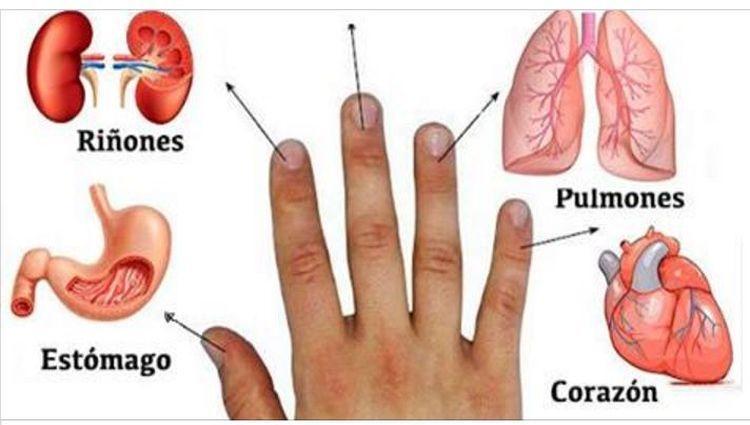 Cada dedo está conectado con dos órganos: Método Japonés de Curación