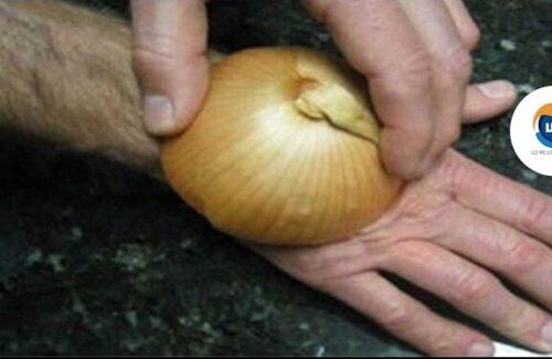 Conoce los Beneficios de Frotar una cebolla cruda en tus manos.